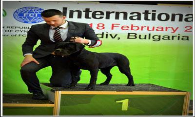 Cane Corso Europe Breeder Puppies Kennel Italian Mastiff News