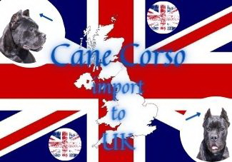 Cane Corso import to the UK