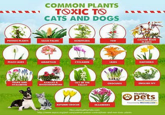 Common plats toxic to cats and dogs chart