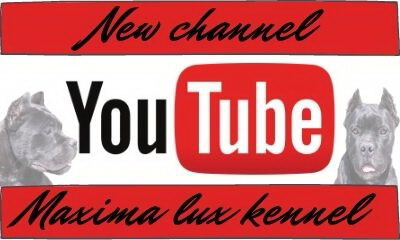 Maxima lux kennel - You Tube channel