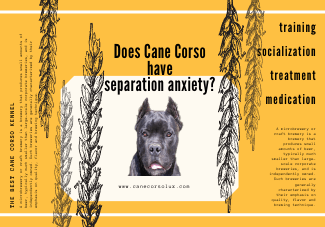 Does Cane Corso have separation anxiety?